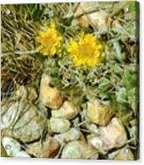 Prairie Rock Garden Acrylic Print