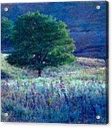 Prairie Trees Impressionistic Grunge Acrylic Print