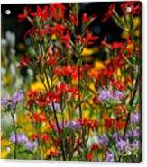 Prairie Wildflowers 2 Acrylic Print