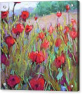 Praising Poppies Acrylic Print