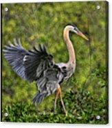 Prancing Heron Acrylic Print