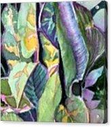 Pray Plant Acrylic Print