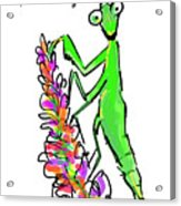 Praying Mantis   The Good Guy Acrylic Print