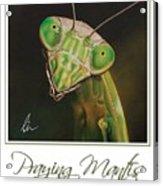 Praying Mantis Poster Acrylic Print