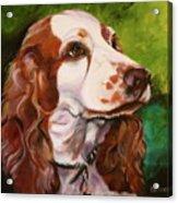 Precious Spaniel Acrylic Print by Susan A Becker