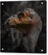 Prehistoric Acrylic Print