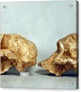 Prehistoric Skulls Acrylic Print