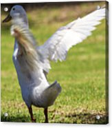 Preparing For Lift Off Acrylic Print
