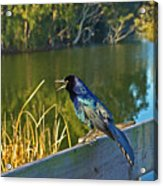 Pretty Bird At A Sunrise Acrylic Print