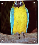 Pretty Bird Acrylic Print