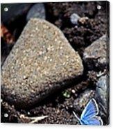 Pretty Butterfly Acrylic Print