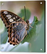 Pretty Butterfly Resting On The Leaf Acrylic Print