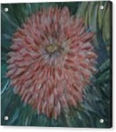 Pretty Dahlia Acrylic Print
