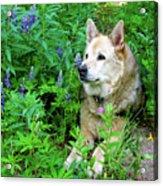 Pretty Dog Acrylic Print