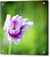 Pretty Flower Acrylic Print