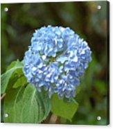 Pretty In Blue Acrylic Print