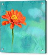 Pretty In Orange Acrylic Print