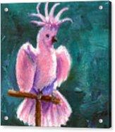 Pretty In Pink Aceo Acrylic Print