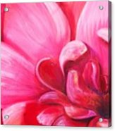 Pretty In Pink Acrylic Print by Dana Redfern
