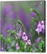 Pretty In Pink N Purple Acrylic Print