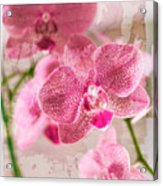 Pretty In Pink Acrylic Print by Pamela Ellis