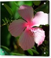 Pretty In Pink Photograph Acrylic Print