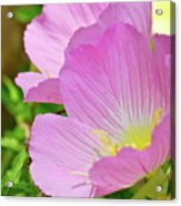 Pretty In Pink Two Acrylic Print