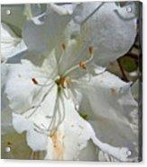 Pretty In White Acrylic Print