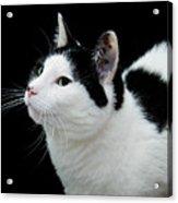 Pretty Kitty Cat 2 Acrylic Print