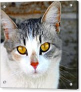 Pretty Kitty Acrylic Print