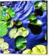 Pretty Lily Pads Acrylic Print