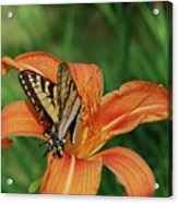 Pretty Orange Lily With A Butterfly On It's Petals Acrylic Print