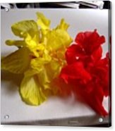 Pretty Pair - Double Hibiscuss Acrylic Print