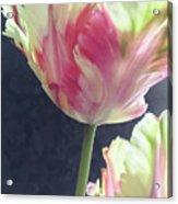 Pretty Parrot Tulip 2 Acrylic Print