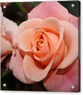 Pretty Peach Acrylic Print