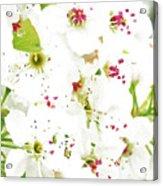 Pretty Pear Petals Acrylic Print