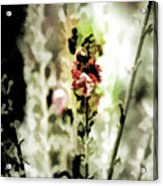 Pretty Perennial Acrylic Print