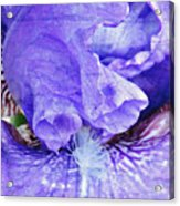 Pretty Purple Acrylic Print