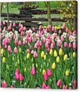 Pretty Tulips Garden Acrylic Print