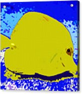 Pretty Yellow Fish Acrylic Print