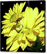 Pretty Yellow Flowers Acrylic Print