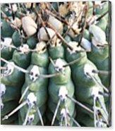 Prickly Cactus Acrylic Print