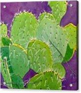 Prickly Pear Cacti  Acrylic Print