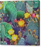 Prickly Pear Cactus 2 Acrylic Print