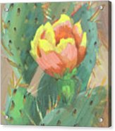 Prickly Pear Cactus Bloom Acrylic Print