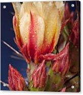 Prickly Pear Flower Wet Acrylic Print