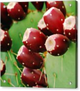 Prickly Pear Fruit Acrylic Print