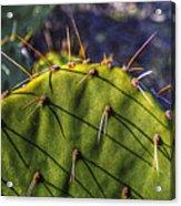 Prickly Pear Study No. 9 Acrylic Print