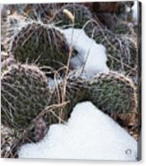 Prickly Pears Acrylic Print