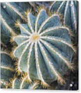 Prickly Acrylic Print
